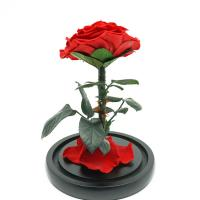 Buy cheap Everlasting Preserved Rose Glass Dome Bring A Unforgettable Experience from wholesalers