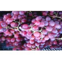 Buy cheap Chinese Sweety Juicy Flame Seedless Red Globe Grapes Health Benifits For Fruit Shop,The largest single grain weight 13 g from wholesalers