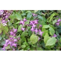 Buy cheap CAS 489-32-7 Epimedium 98% Icariin Natural Herb Extract from wholesalers