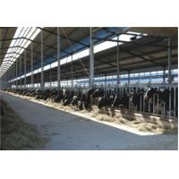 Buy cheap Small Scale Milk Processing Equipment With Milk Receiving UHT And Filling System from wholesalers