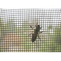 Buy cheap insect screen product