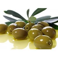 Buy cheap Supply Olive Leaf Extract Powder 40% Oleuropein from wholesalers