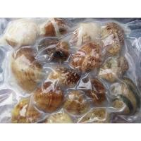Frozen Boiled Short Necked Clam ( Baby Clam)