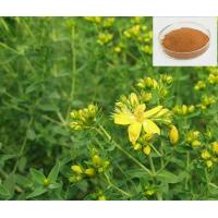 Buy cheap St.John's wort extract from wholesalers
