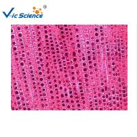 Wholesale Commercial Plant Microscope Slides 5pcs Five Onion Root Tip Mitosis Set from china suppliers