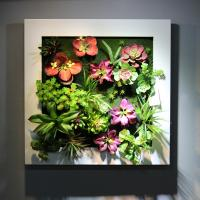 Buy cheap Home Furnishing Artificial Living Wall Panel Fake Succulent Art Plants from from wholesalers