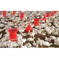 Buy cheap automatic poultry equipments of feeder from wholesalers