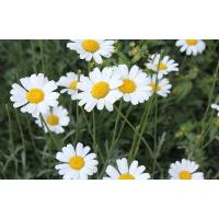Buy cheap pyrethrum extract product