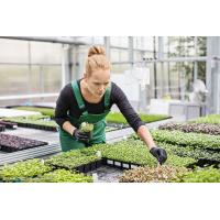 Buy cheap Venlo Type PC Sheet Greenhouse Cover Thickness 4 / 8 / 10mm Simply Constructed And Installed from wholesalers
