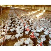 Buy cheap WorldPoultry - Night time cooling pad operation during extremely hot from wholesalers