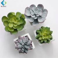 Wholesale Artificial Plastic Succulent Plants 5-10 Years Life Time For Room Ornament from china suppliers