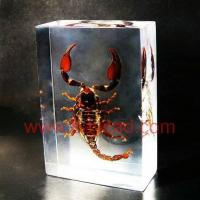 Buy cheap The Scorpion King, Powerful Real Scorpion Inside Resin Craft, Resin Insect Specimens from wholesalers
