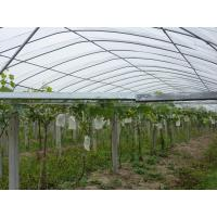Floating Row Frost Protection Cover, Agriculture Greenhouse PP Spunbond Non Woven Fabric Manufactures