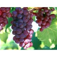 Buy cheap Cosmetics ingredient Procyanidolic≥95.0%;OPC≥95.0%, Polyphenol 75% Grape seed Extract from wholesalers