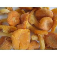 Buy cheap Chanterelle,wild mushrooms from wholesalers
