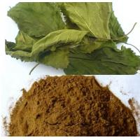 Buy cheap Natural Mulberry Extract  1-Deoxynojirimycin (DNJ)5% powder from wholesalers