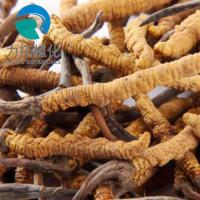 Buy cheap Liquid Solid Extraction Cordyceps Sinensis Extract Brown Powder HPLC UV Test Method from wholesalers