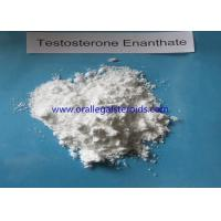 Wholesale Bodybuilding Testosterone Enanthate Injection 250 , 315 37 7 Safe Testosterone Booster from china suppliers