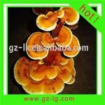 Buy cheap Ganoderma Lucidum from wholesalers