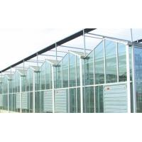 Buy cheap Agricultural Intelligent Glass Multi Span Greenhouse Galvanized Steel Structure from wholesalers