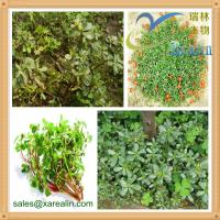Buy cheap High Quality Skin Care Purslane Powder Portulaca Oleracea Extract from wholesalers