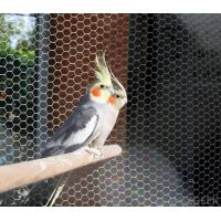Buy cheap stainless steel 304/316 Aviary mesh for bird cages netting/aviary building product