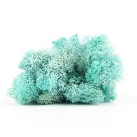 Buy cheap Eternal Multiple Colors Preserved Reindeer Moss For Wall Decoration from wholesalers