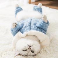 Buy cheap Warm Cats Wearing Clothes Environment Friendly Bunny Ears Hoodie Pullover Design from wholesalers