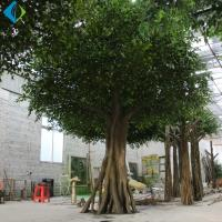 Wholesale Umbrella Shape Faux Ficus Tree For Indoor Decoration 5-10 Years Life Time from china suppliers