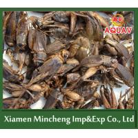 Buy cheap Freeze Dried Cricket from wholesalers
