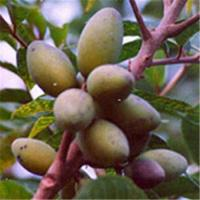 Buy cheap Olive Leaf Extract P[owder from wholesalers
