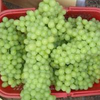 Buy cheap Tompson Seedless Style Fresh Grapes, Available in Green and Yellow Colors from wholesalers