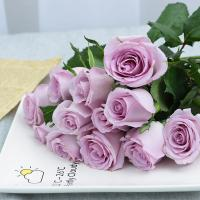 Wholesale Fresh cut roses natural flowers wholesale prices export fresh cut blue roses ocean song PURPLE rose from china suppliers