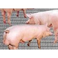 Buy cheap pig-breeding wire mesh from wholesalers