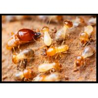Buy cheap High Effect Professional Termite Treatment CAS 120068-37-3 Fipronil 0.5% DP from wholesalers