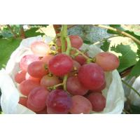 Buy cheap Organic Sweet White / Green Thompson Seedless Grapes No Insect Containing High Sugar from wholesalers