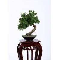 Buy cheap Botanical Mix Decorative Pine Trees , 40cm Faux Bonsai Tree Nature Inspired product