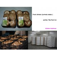 Buy cheap Fresh Mushroom, Shiitake, Eryngii, Enoki, Shimeji, Hakurai-take from wholesalers