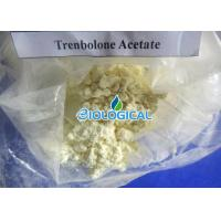 Buy cheap Trenbolone Steroid Powder Trenbolone Acetate / Tren Ace / Tren A Steroid For Bodybuilding from wholesalers