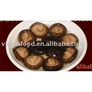 China Shiitake(Champignon) in Brine on sale