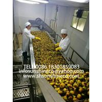 China Professionaly supply belt juicer thorn-pear juicing machine thorn-pear processing line, apple processing machine on sale