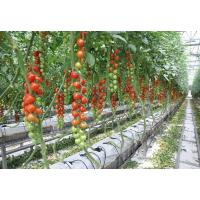 Buy cheap Strong Structure Multi Span Greenhouse , Plastic Tomato Greenhouse Section 4m from wholesalers