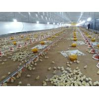 Buy cheap Prefabricated Steel Structure Broiler House for Poultry Shed Cage Layer Chicken House china Broiler Chicken House from wholesalers