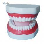 Buy cheap Plastic Dental Model Of Tooth Anatomical Model With 32 Tooth Dental Teaching Model from wholesalers