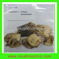 Buy cheap Straw Mushroom from wholesalers