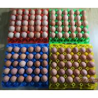 Buy cheap 30 holes Plastic egg tray/ plastic mould product from wholesalers