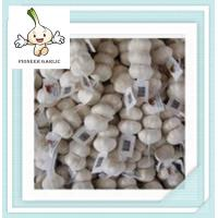 fresh natural garlic manufacture fresh frozen food supplier in the package of mesh bag Manufactures