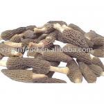 Buy cheap Morel Mushroom Dried from wholesalers