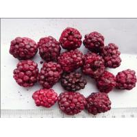 Buy cheap Raw Fruit Flavour Freeze Dried Blueberries Microelements Contained Low Calorie from wholesalers