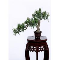 Wholesale Buddhist Bonsai Pine Tree 25*52cm No Watering Trimming Timeless Beauty from china suppliers